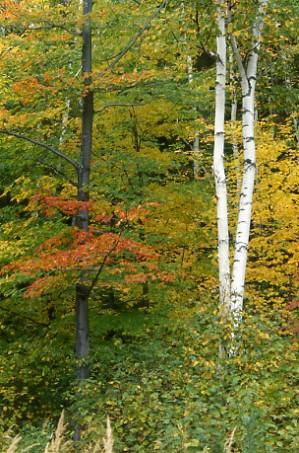 deciduous forest biome definition